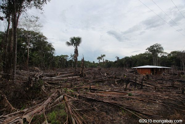 Website for students to go to that clearly outlines deforestation and the effects. Has a short quiz at the bottom for personal evaluation of what has been learned.