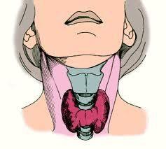 С точки зрения духовной психологии, щитовидная железа - железа чувствительности, утонченности чувств, остроты восприятия и творческого выражения мысли. Кроме того, щитовидная железа - энергетическая железа, ибо её секреция является регулятором темпа ...