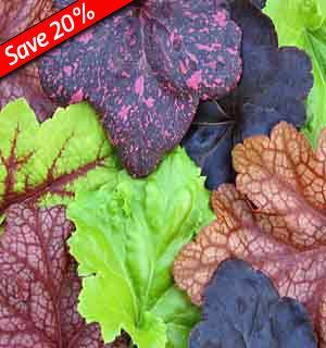 101 best Shade Garden Ideas images on Pinterest Shade garden