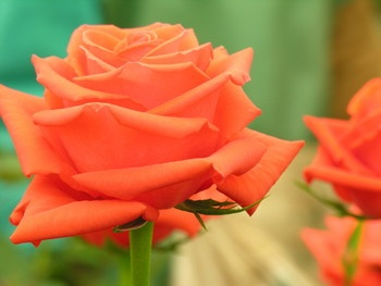 """""""What's in a name? That which we call a rose  By any other name would smell as sweet."""""""