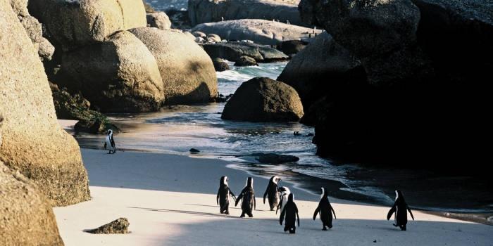 Simonstown - Bolders Beach Zuid Afrika