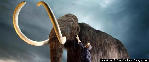 Wooly Mammoth Clone. NO! there is a reason they are extinct