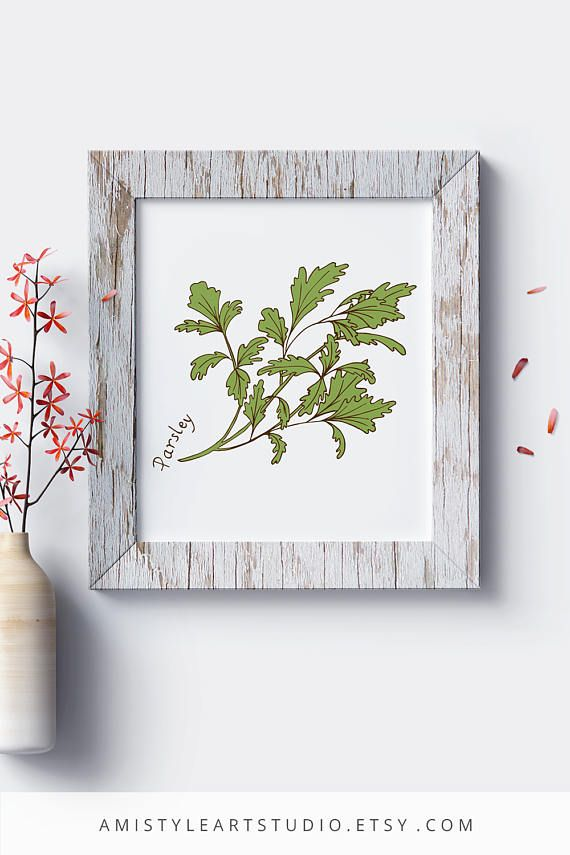 Botanical Wall Art - Parsley - printable herbs kitchen decor with hand-drawn botanical parsley plant by Amistyle Art Studio on Etsy