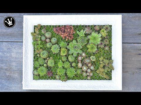 (21) DIY - mit Sukkulenten bepflanzter Bilderrahmen | Vertikaler Garten | Hängender Garten - YouTube