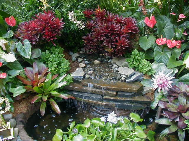 47 best images about Bromeliads on Pinterest Gardens