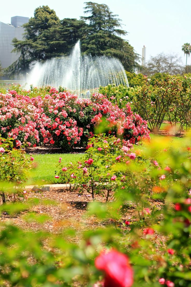 Rose Garden at Exposition Park, Los Angeles - Photo by Mademoiselle Mermaid