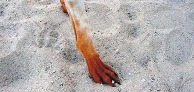 HD Mehndi Designs Beautiful Eid Collection For Girls Best Mehndi Designs: Henna Tattoo Designs For Feet HD Mehndi Designs Beautiful Eid Collection For Girls Best Mehndi Designs