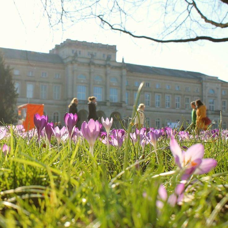 Heute ist #Frühlingsanfang  wir sind einfach mal optimistisch dass es in den nächsten Tagen auch frühlingshaftes Wetter gibt  #visitkarlsruhe #karlsruhe #visitbawu #bwjetzt #Frühling #flowerpower #springiscoming #spring #krokusse #flowers #green #naturkundemuseum #travel #explore #explorekarlsruhe #Stadtansichten #stadterlebnis #citylife #city #monday #mondaymotivation #newweek