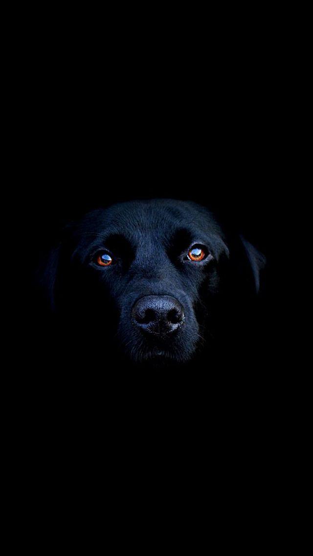 black.quenalbertini: Black dog