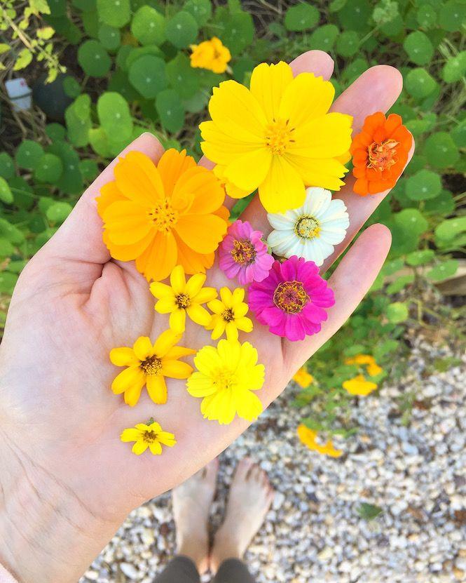 73 best cultivate book images on pinterest lara casey for Gardening 101 lara casey