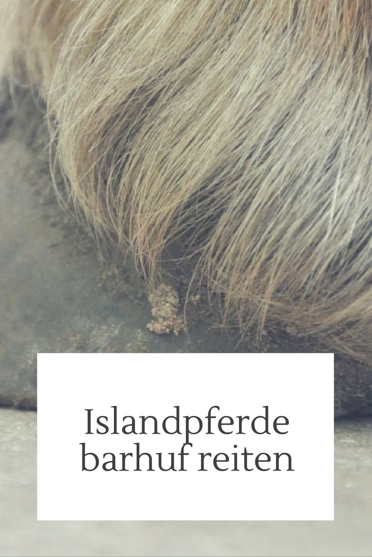 Islandpferde barhuf reiten - ein Erfahrungsbericht