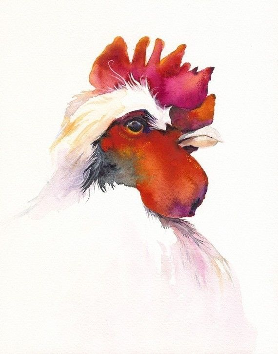amberalexander on Etsy  #rooster #bird #watercolor #paintings | pinned by www.amgdesign.nz