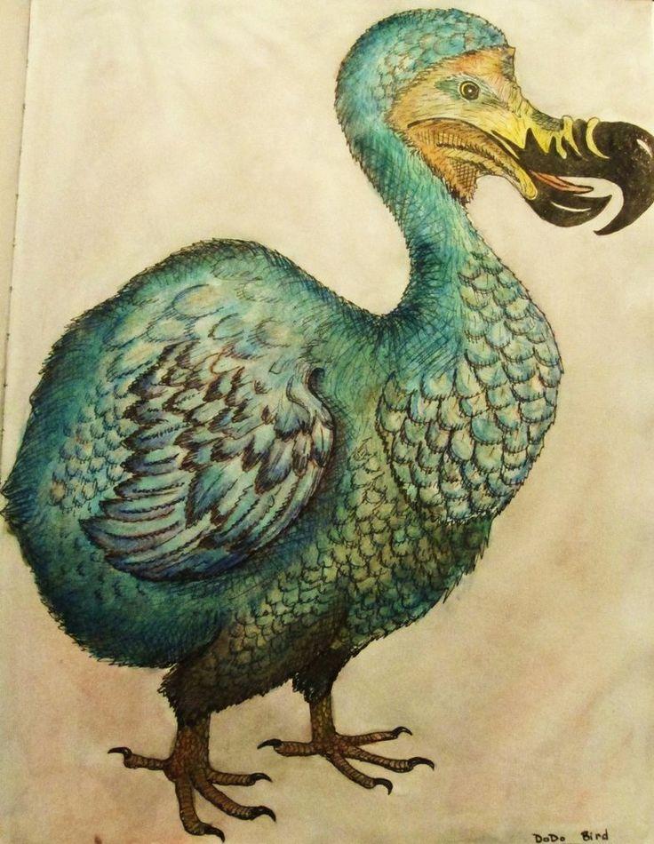 Dodo bird extinction date in Brisbane