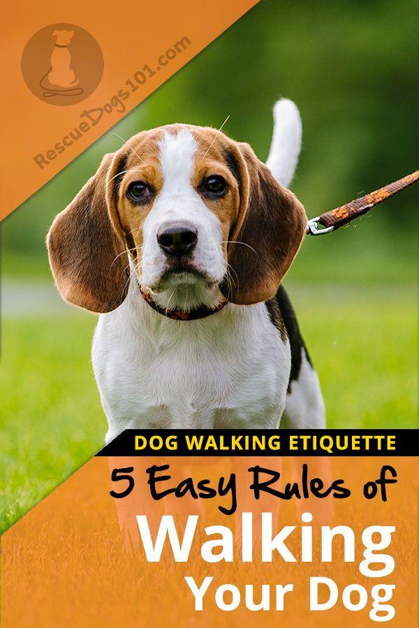 5 Rules Of Walking Your Dog Etiquette Fun Dog Stuff Training
