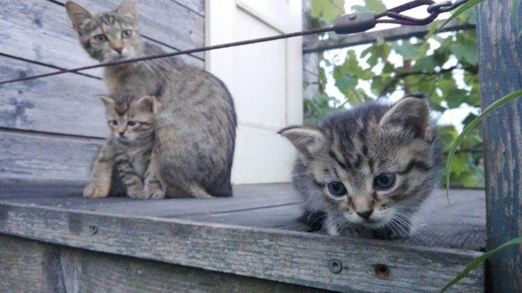 Little kitties ❤
