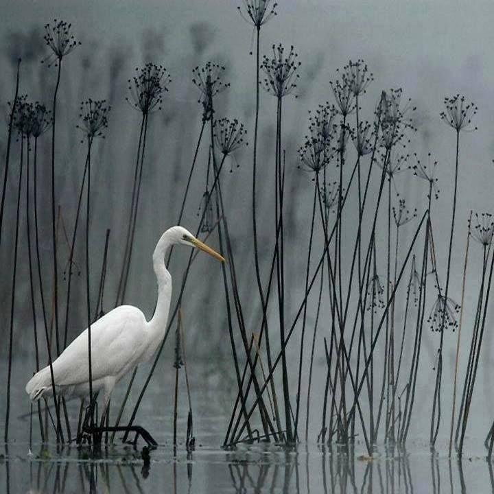 In Silence....by Heinz Buls