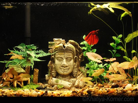Fish tank idea.  Love the Bayon statue.....looks as if you are in the Cambodian jungle.