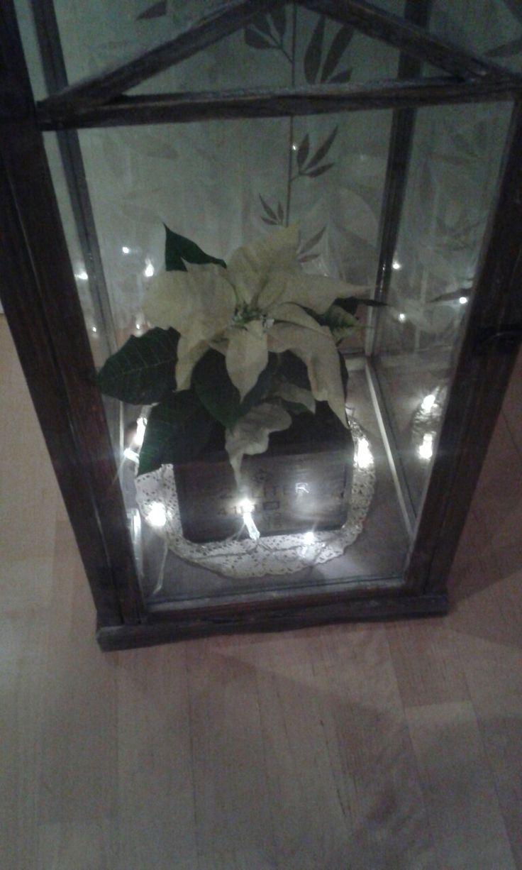 Joulutähti, joulu, lyhty, valot.