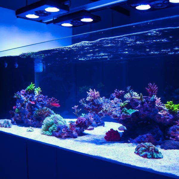 Saltwater Aquarium Aquascape: Best 25+ Reef Aquascaping Ideas On Pinterest