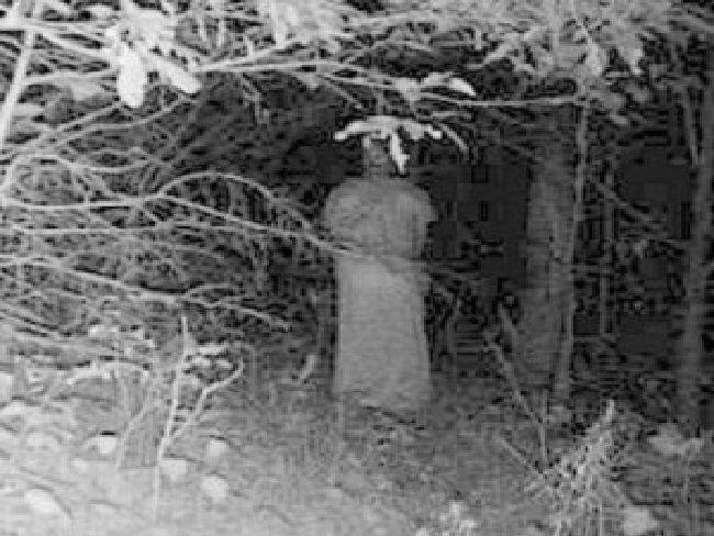 Una presencia misteriosa entre los árboles
