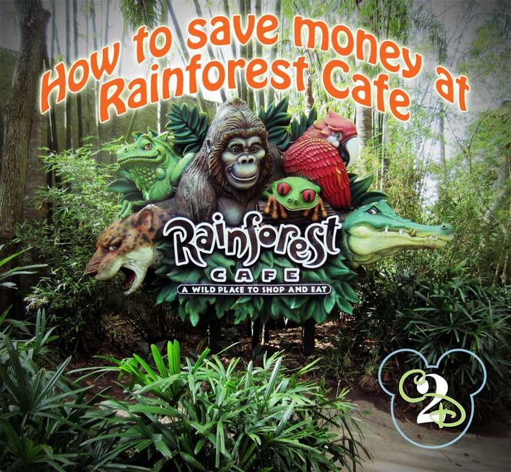 Tips on how to save money at the Rainforest Cafe. There is one located at Disney's Animal Kingdom and Downtown Disney at Walt Disney World.