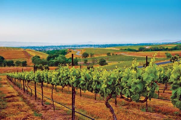 Tri-Valley - In the eastern portion of the San Francisco Bay Area, the rolling terrain of Amador, San Ramon, and Livermore Valleys offers visitors an array of ways to getaway.