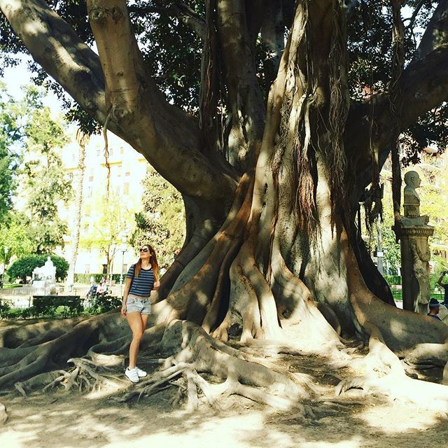 Truly the tree of life ❤️ met this 600 year old friend in the park today 🌲  #moschino #coolcat #hm #ralphlauren #designerfashion #designerbags #outfit #daily #instafashion #fashion #instagood #photooftheday #valencia #spain #spanish #igers #jetsetter #travel #travelgram #igersoftheday #city #escape #style #stylediaries #styleinspo #happy #positivity by daytwentyofficial. instagood #igersoftheday #spain #style #outfit #photooftheday #stylediaries #travel #valencia #escape #coolcat…