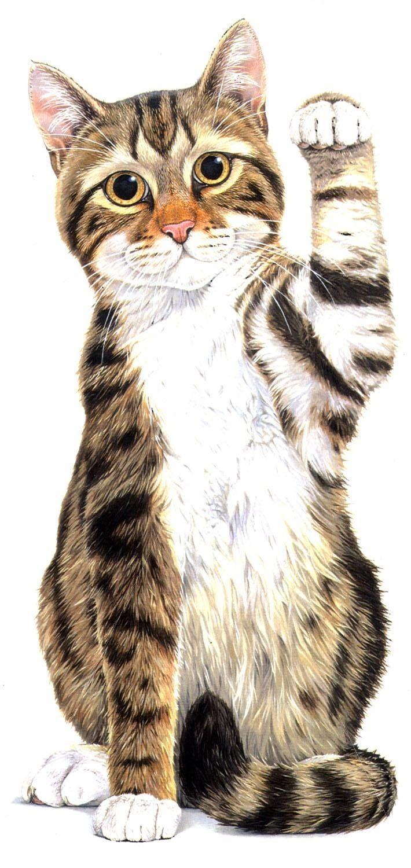 Artist - Andrew Beckett si, juro! palabra de gato...