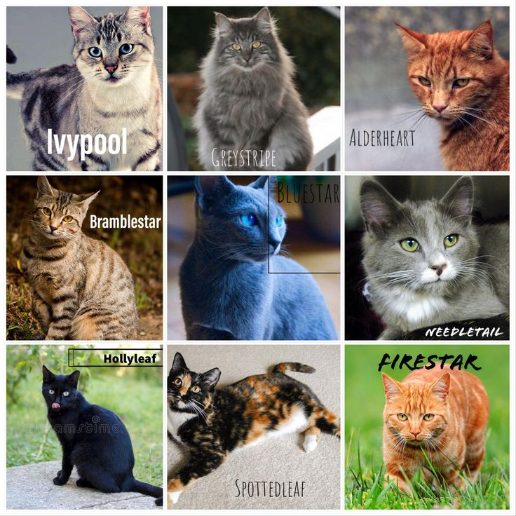Warrior cats in real life, let me know if you want more ...