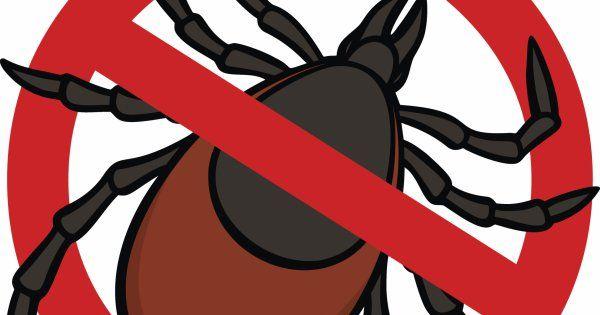 #Comment soigner une piqûre de tique ? - Avantages: Comment soigner une piqûre de tique ? Avantages Les piqûres de tique peuvent également…