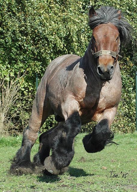 Zentrierringe 70 1 Auf 66 6 : 465 besten kaltbl ter pferde bilder auf pinterest ~ Jslefanu.com Haus und Dekorationen