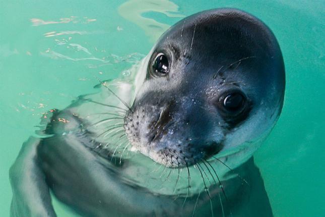 Griekenland.net adopts Monk seal Little Bill