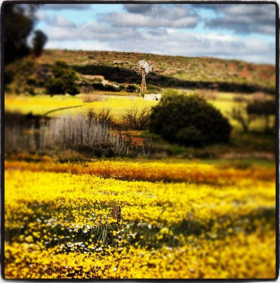 Namaqualand in Spring time is definitely one of the places we'd suggest you take your kids --> http://www.news24.com/Travel/Guides/Easter/13-great-South-African-spots-to-show-your-kids-20140325