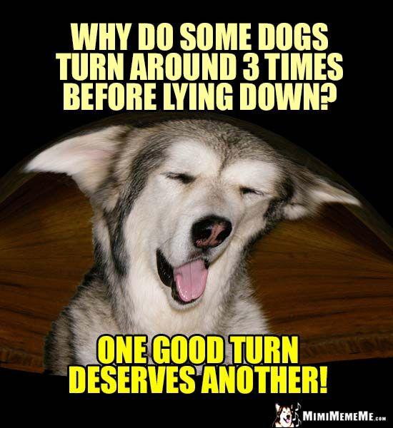 Funny Dog Joke Meme : Best easygoing dog comedian jokes images on