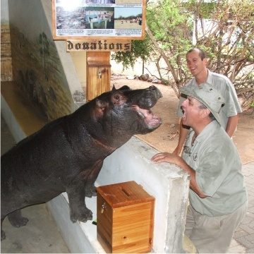 Pet a hippo cause they are SOOOOO cute!!!!!