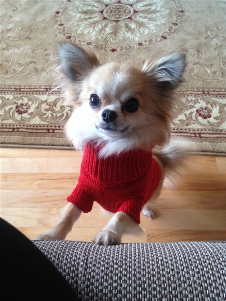Cute Doggy Sweaters !! From £14.95 ♥ Yuppypup.co.uk provides the fashion conscious with stylish clothes for their dogs. Luxury dog clothes and latest season trends, Dog Carriers and Doggy Bling. . Please go to http://www.yuppypup.co.uk/