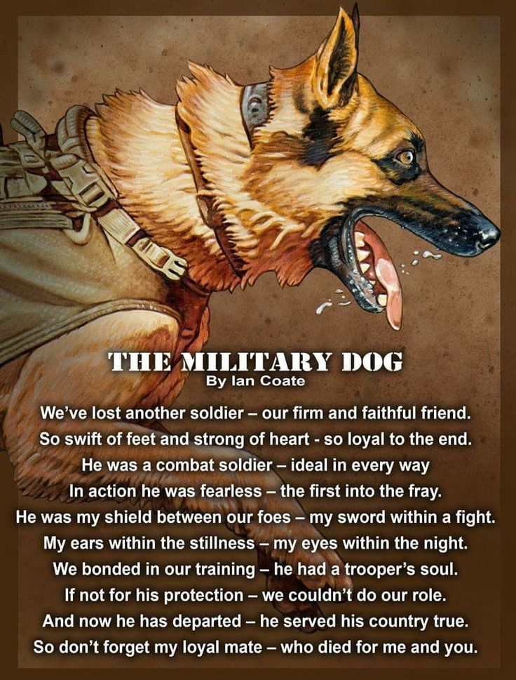 Awwww❤️military dogs are so brave