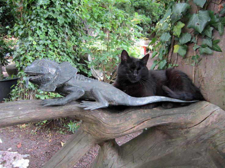 Et la reine de la jardinerie... l'hôte de ces lieux... Photo Taffin