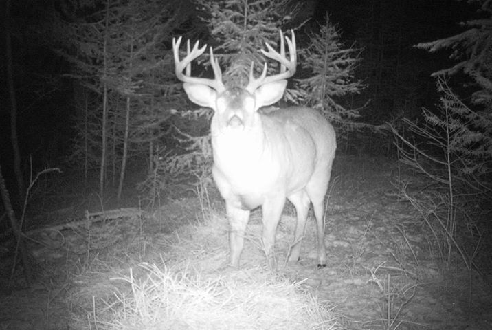 The fattest buck I've ever seen - what are they feeding it???