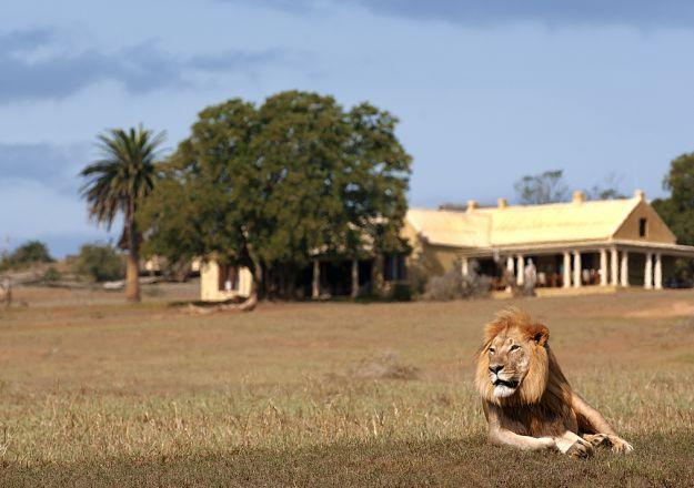 Daar is 'n leeu op Gorah Elephant Camp se stoep!