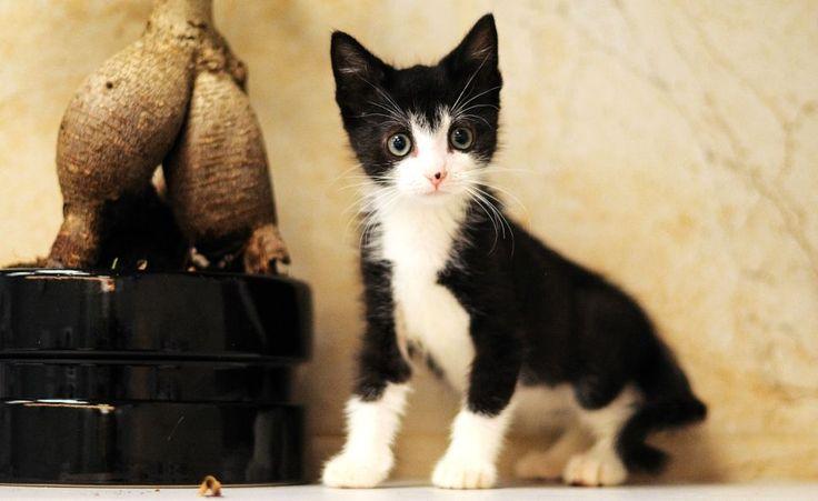 """Котёнок Ван (1). Котёнок, примерно 3 месяца. Тема на форуме Благотворительного Фонда """"Сохрани Жизнь"""" - http://save-life.me/forum/viewtopic.php?f=22&t=4517 . Нашёл Дом!"""