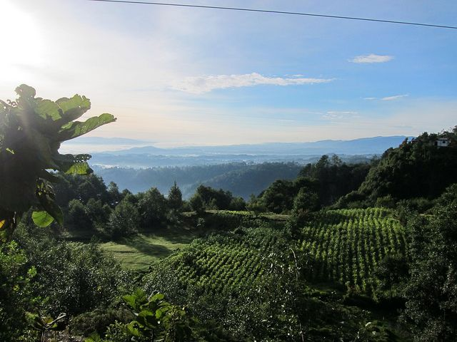 #Coffee plantations in the highlands of #Guatemala photo by Anna Clark