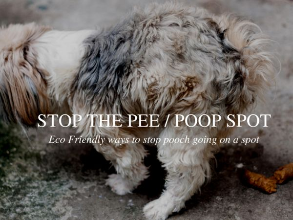 How to stop your dog pooping where its Sooo not wanted!  ;)   Eco friendly tips.