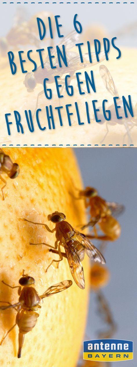 Πάνω από 25 κορυφαίες ιδέες για Fruchtfliegen στο Pinterest - hausmittel gegen ameisen in der küche