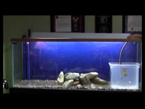 Setting up my 90 Gallon Fish Tank - YouTube