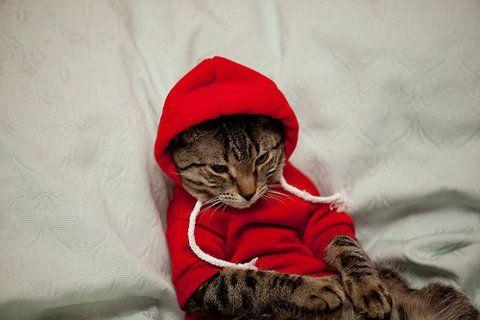 meowzersHipster Cat, Hoodie, Little Red, Thug Life, Hip Hop, Red Riding Hoods, Cat Sweatshirts, Animal, Baby Cat