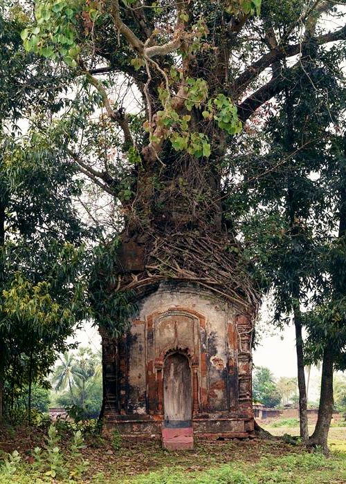Banyan Tree and16th Century Terracotta Temple . Attpur, West Bengal
