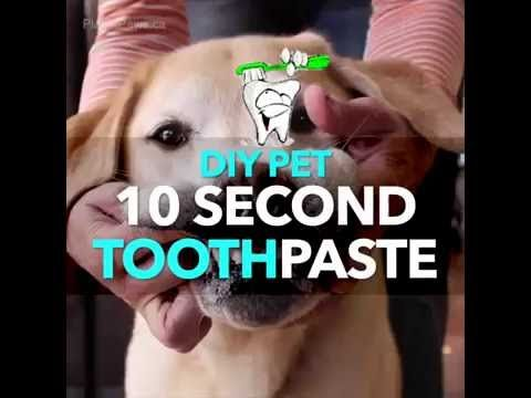 Epic DIY ToothPaste for Pets remended by Dr Karen Becker YouTube
