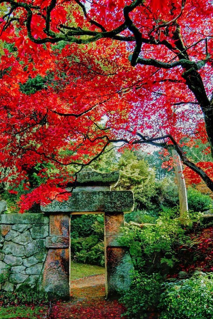 343 best images about garden separation ideas portes et for Jardin 974