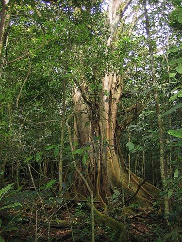 Selva Negra, near Matagalpa Nicaragua//Photo by brandonpdx